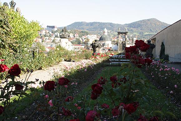 Jardin de roses, Decin