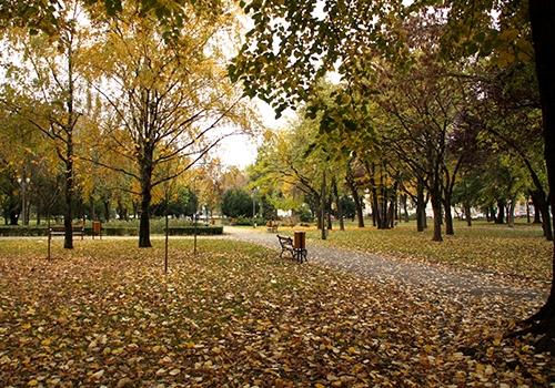 Parc Timisoara